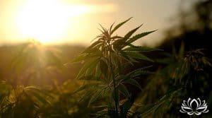 Stupéfiants : Le gouvernement libéralise la vente et la possession de drogues de catégorie II
