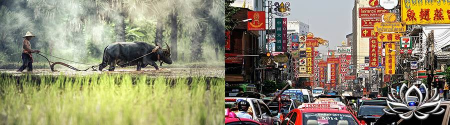 Bangkok ou les campagnes du nord-est de la Thaïlande