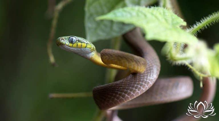 Read more about the article Attaqué par un serpent